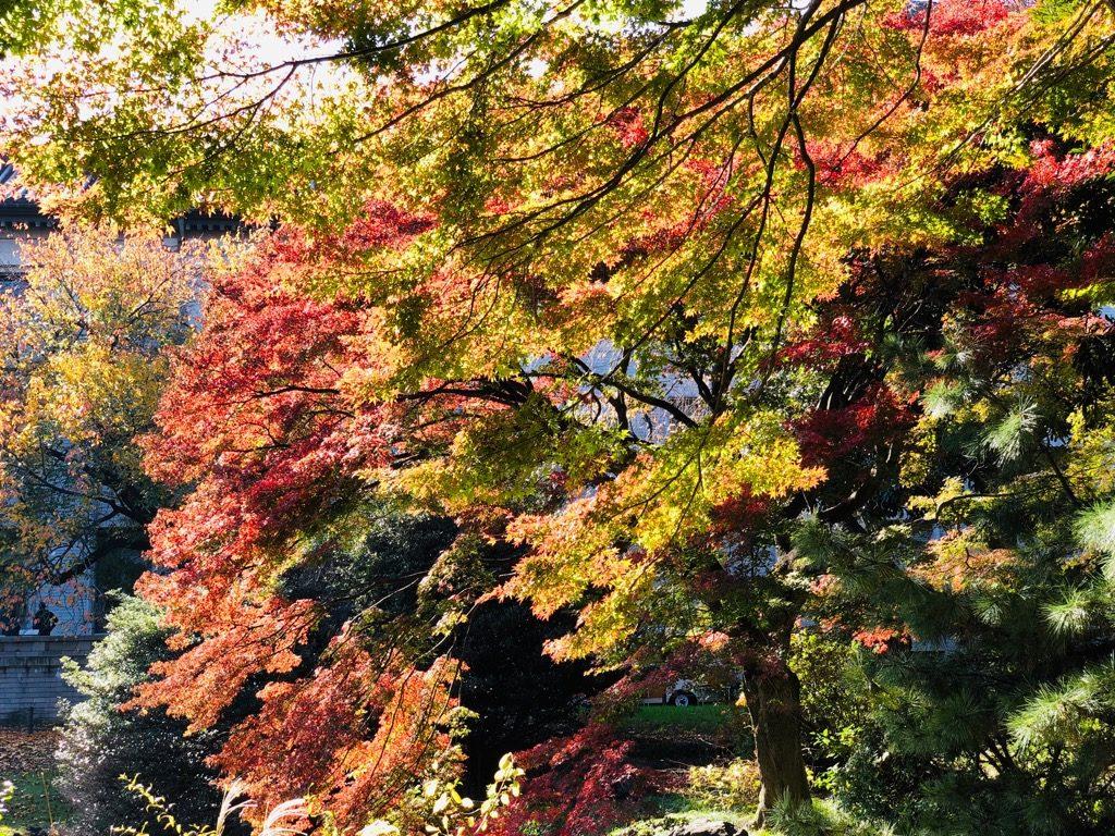 東京国立博物館、庭園の紅葉 (2018年11月30日撮影)