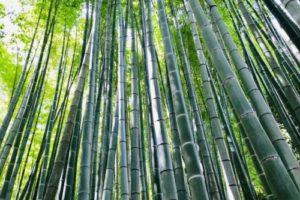 鎌倉・報国寺の竹林は絶景!