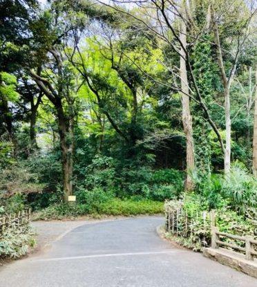 静嘉堂文庫美術館 美術館へ通じる散策路。