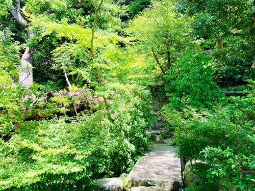 五島美術館庭園。 庭園というより、もはや森林。