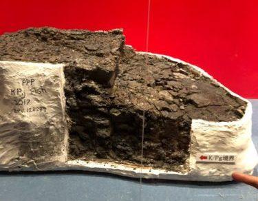 P/Kg境界を示す化石。