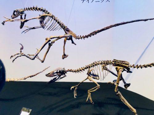恐竜博2019:テノントサウルスとデイノニクスの躍動感あふれる骨格展示。