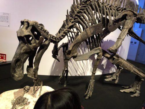 子育て恐竜の先駆け、マイアサウラ。