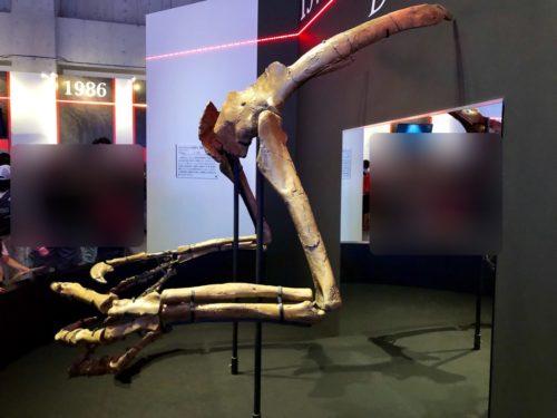 デイノケイルスの前足骨格。