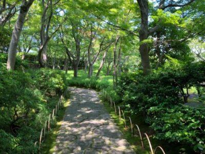光琳屋敷へ通じる、自然豊かな日本庭園。